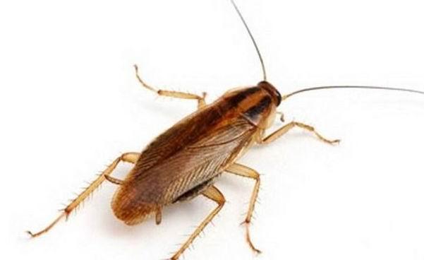 ультразвуковые отпугиватели тараканов екатеринбург