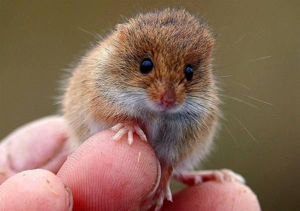 мышь отпугиватель ультразвуковой